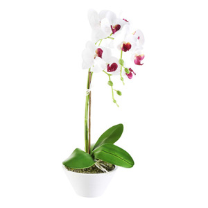 Orchidee im Topf in weiß 44,5 cm