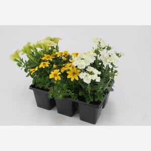 """Sommerblumenmischung """"Blooming Joy"""""""