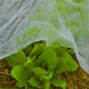 Gartenvlies 1,5x5m 17g/m² weiss Wintervlies Schutzvlies Pflanzenschutz