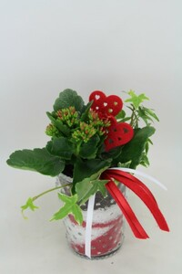 Arrangement Kalanchoe und Efeu ,  10,5 cm Glasvase Perle
