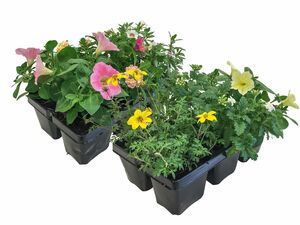 Beetpflanzen-Kollektion