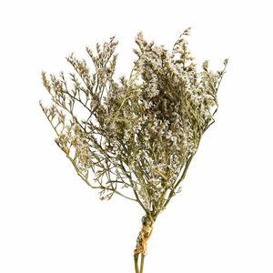 Blumenbündel Statice, L:60cm, weiß