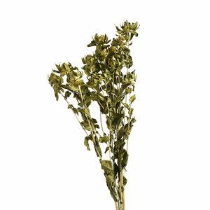 Blumenbündel Zweizahn, L:70cm, grün