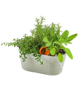 Bepflanzte Kunststoffjardiniere Kräuter