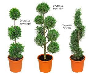 GARDENLINE®  Pflanze im Formschnitt