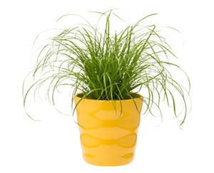 GARDENLINE®  Pflanzensortiment, exotisch