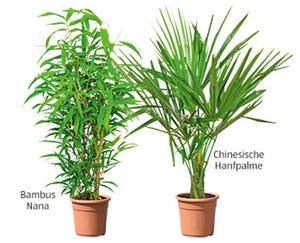 GARDENLINE®  Palmen- und Bambussortiment