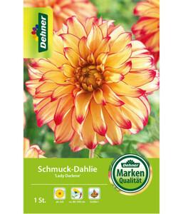 Dehner Blumenzwiebel Schmuck-Dahlie 'Lady Darlene'