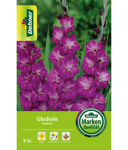 Dehner Blumenzwiebel Gladiole 'Violetta'