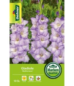 Dehner Blumenzwiebel Gladiole 'Mediterranee'