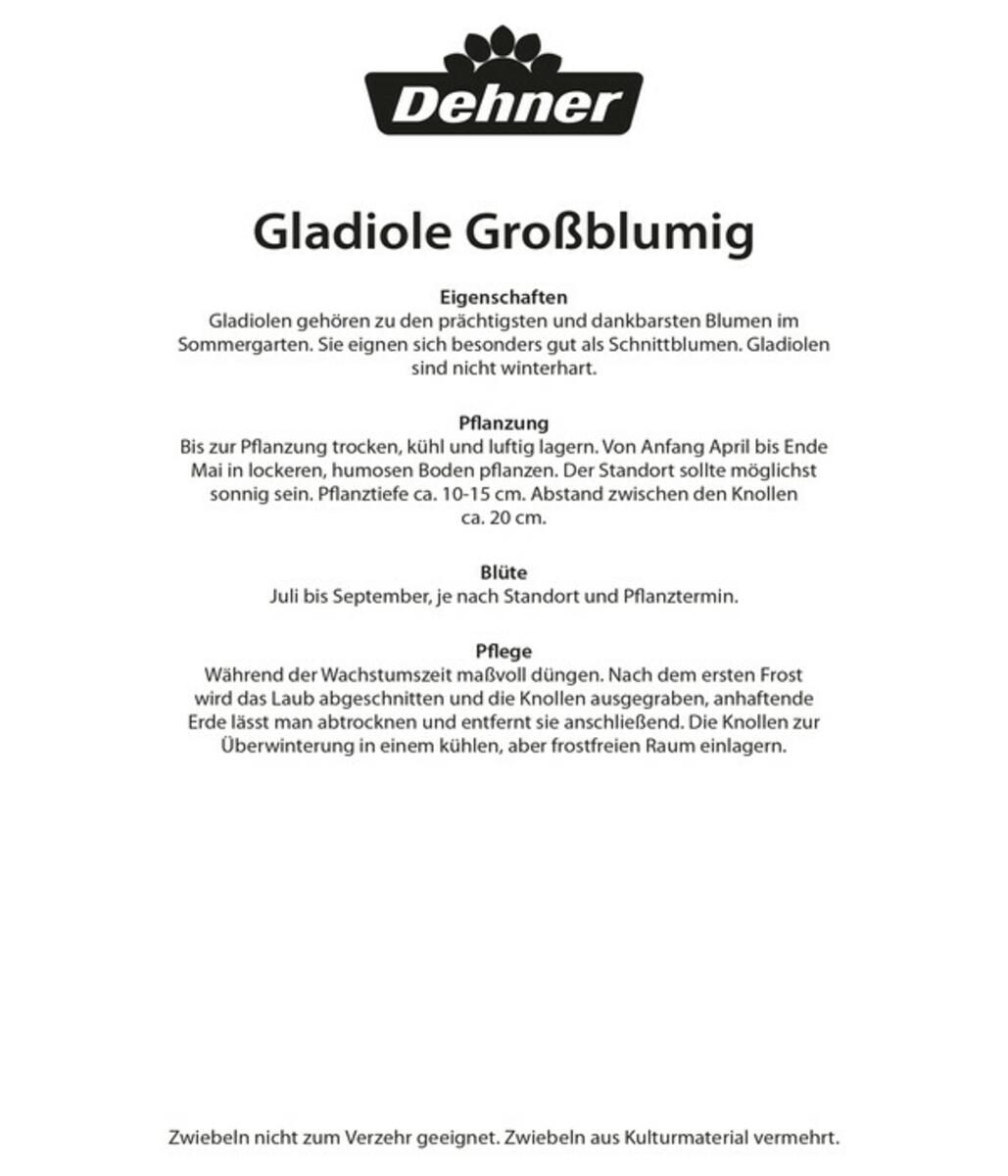 Bild 2 von Dehner Blumenzwiebel Gladiolen-Mischung
