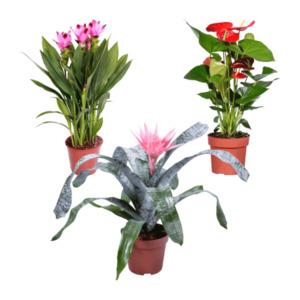 GARDEN FEELINGS     Exotische Blühpflanze