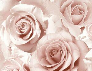 Papiertapeten Rosen