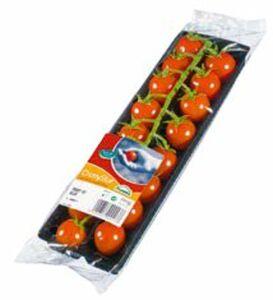 Cherrystar Tomaten