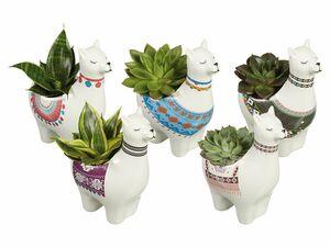 Easy Care-Pflanzen in Keramik