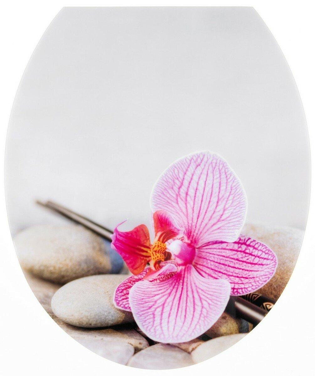 Bild 1 von badkomfort Hochglanz-WC-Sitz mit Acryl-Beschichtung, Orchidee
