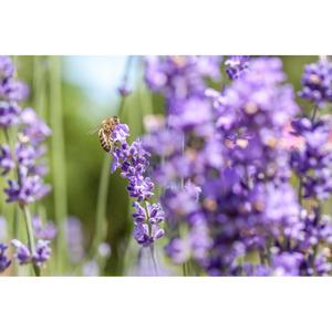 Beetpflanzen Mix - Heat Lovers