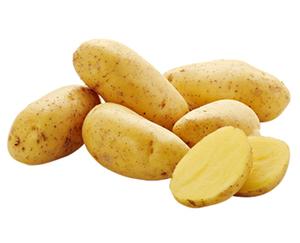 Bio-Speisefrühkartoffeln*