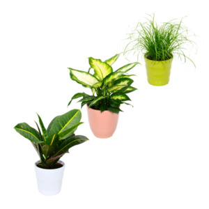 GARDEN FEELINGS     Exotische Pflanze