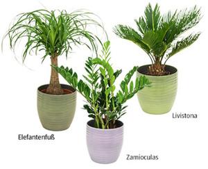 GARDENLINE®  Pflanzenbesonderheit