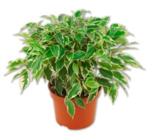 Verschiedene Grünpflanzen