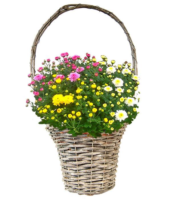 Henkelkorb mit Chrysanthemen-Trio