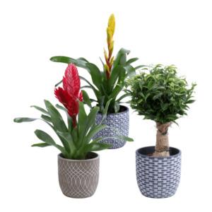 GARDEN FEELINGS     Pflanze in Trendkeramik