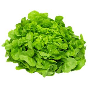REWE Regional GQB Eichblattsalat grün 1 Stück