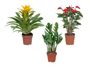 Grün-/Blühpflanze