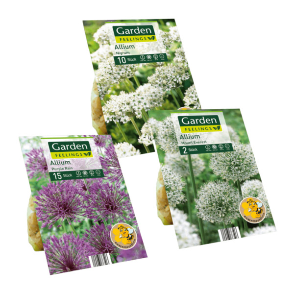 GARDEN FEELINGS     Zierlauch-Blumenzwiebeln