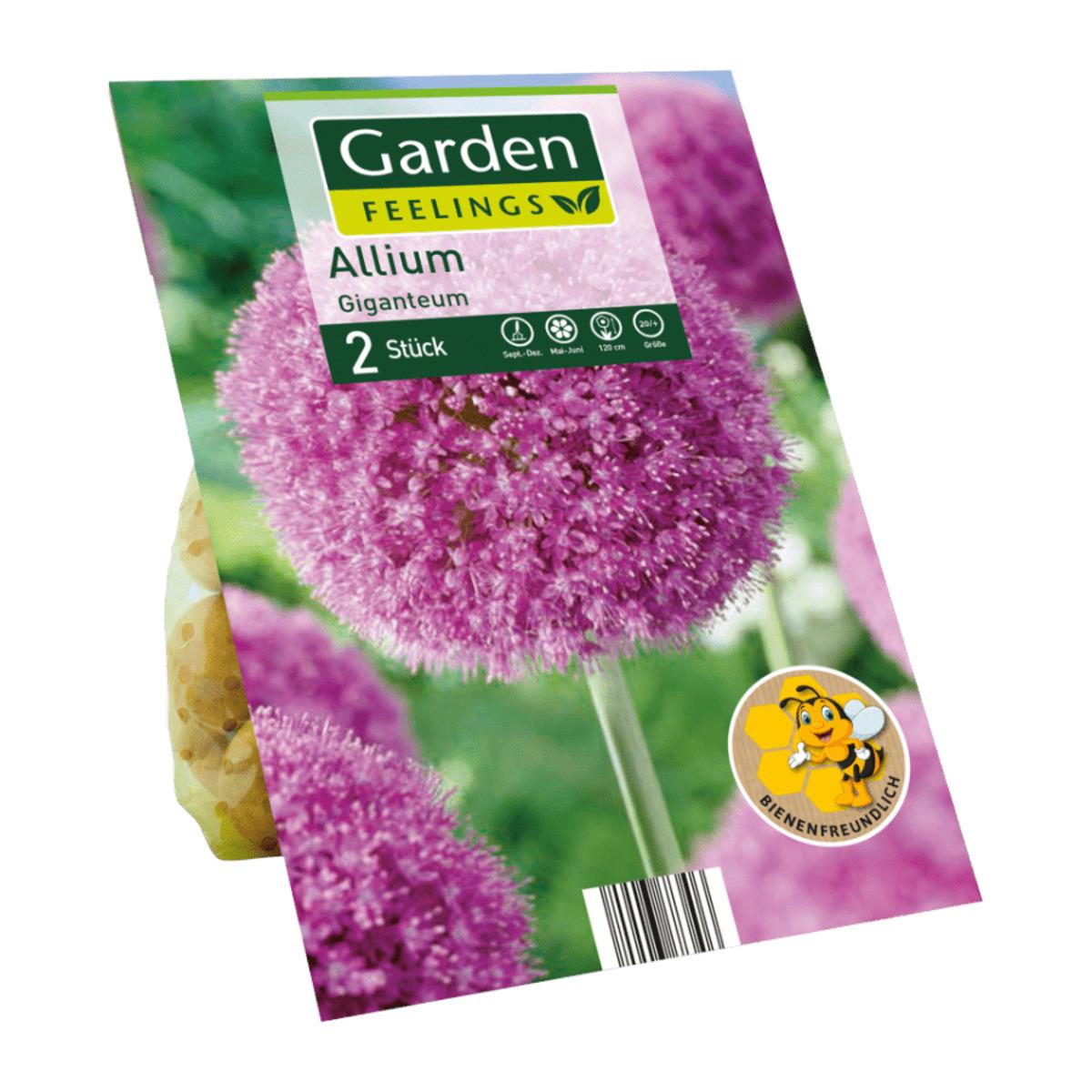 Bild 2 von GARDEN FEELINGS     Zierlauch-Blumenzwiebeln