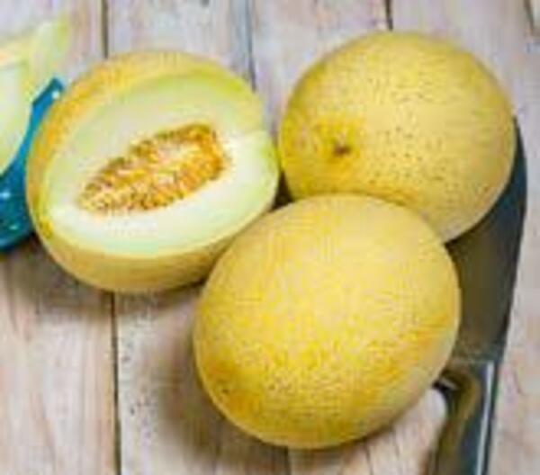 Bio-Cantaloupe oder Bio-Galia Melonen