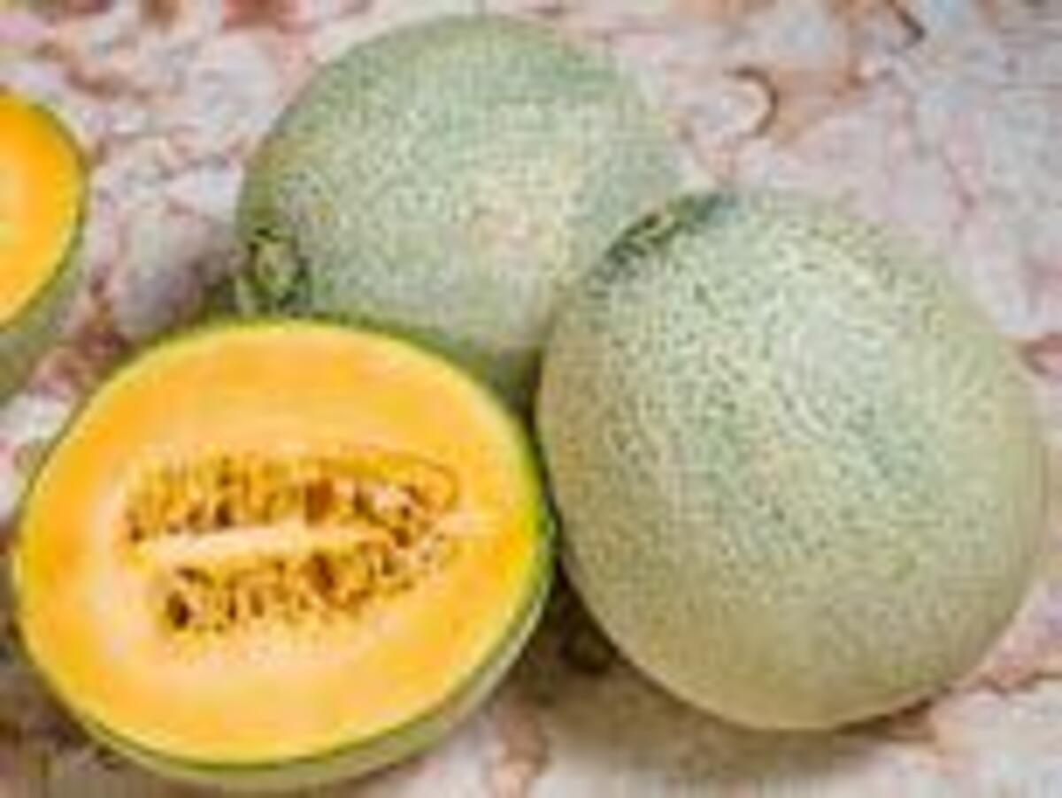Bild 2 von Bio-Cantaloupe oder Bio-Galia Melonen
