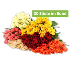 Wunderschöne Rosen in verschiedenen Farben
