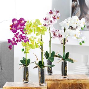 Bella Casa Deko-Orchidee