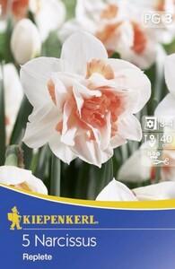 Kiepenkerl Blumenzwiebel Narzisse ,  5 Blumenzwiebeln