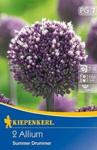 Kiepenkerl Blumenzwiebel Allium ,  2 Blumenzwiebeln