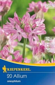 Kiepenkerl Blumenzwiebel Allium ,  20 Blumenzwiebeln