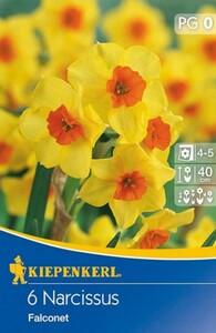 Kiepenkerl Blumenzwiebel Narzisse ,  6 Blumenzwiebeln