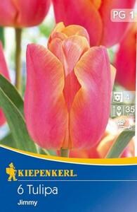 Kiepenkerl Blumenzwiebel Tulpe ,  6 Blumenzwiebeln