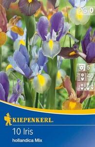 Kiepenkerl Blumenzwiebel Iris hollandica ,  10 Blumenzwiebeln