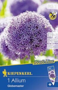 Kiepenkerl Blumenzwiebel Allium ,  1 Blumenzwiebel