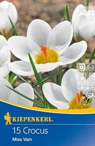Kiepenkerl Blumenzwiebel Crocus ,  15 Blumenzwiebeln