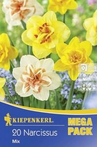 Kiepenkerl Blumenzwiebel Narzisse ,  20 Blumenzwiebeln