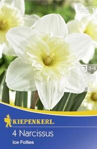 Kiepenkerl Blumenzwiebel Narzisse ,  4 Blumenzwiebeln