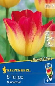 Kiepenkerl Blumenzwiebel Tulpe ,  8 Blumenzwiebeln