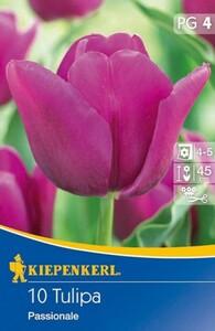 Kiepenkerl Blumenzwiebel Tulpe ,  10 Blumenzwiebeln