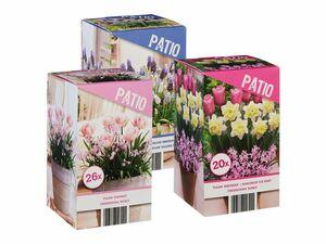 Patio-Frühlingsblumenzwiebel