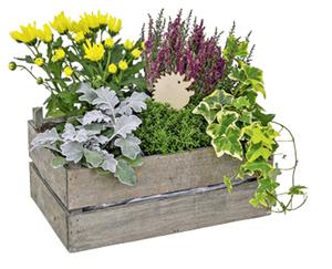 GARDENLINE®  Bepflanztes Holzgefäß oder Korb