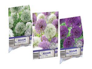 Allium-Zwiebeln/ Zierlauch-Mischung